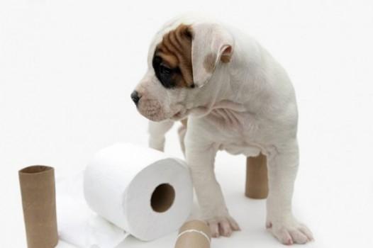 apprendre la propreté à un chiot