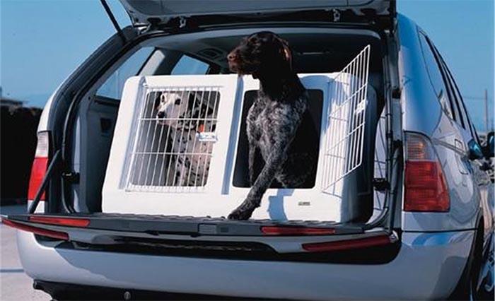 cage de transport chien voiture