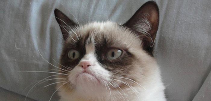 chat qui boude son griffoir