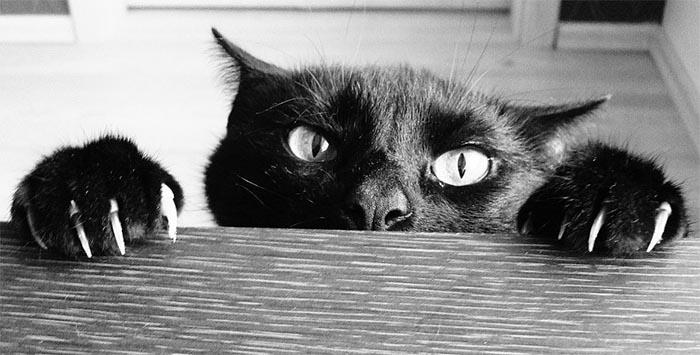 griffoir chat avis