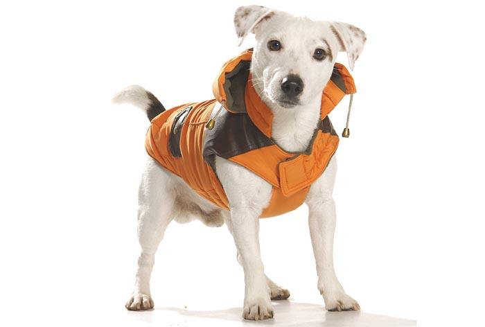 manteau pour chien doudoune