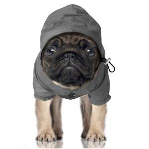 manteau pour chien pluie
