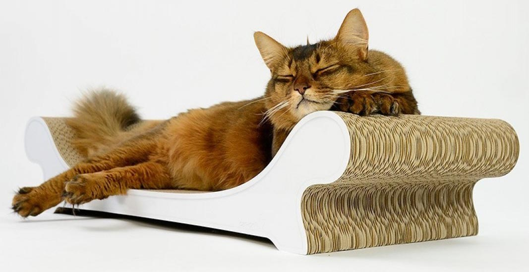 meilleur griffoir chat