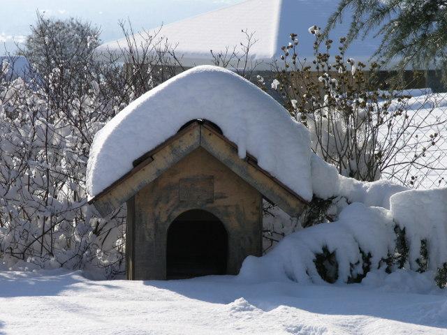 niche pour chien en hiver conseil