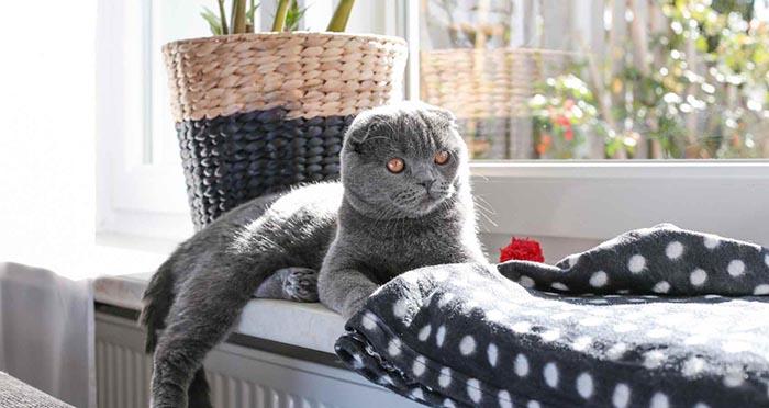 ou placer un griffoir chat