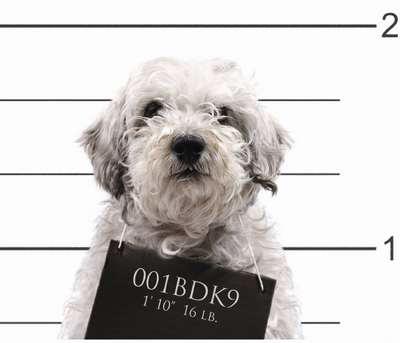 problème-comportement-chien