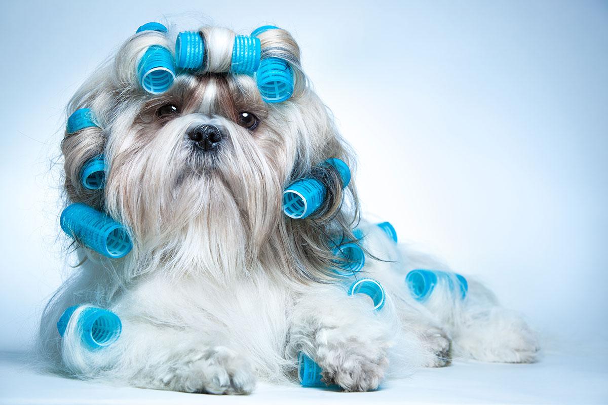 meilleure tondeuse pour chien