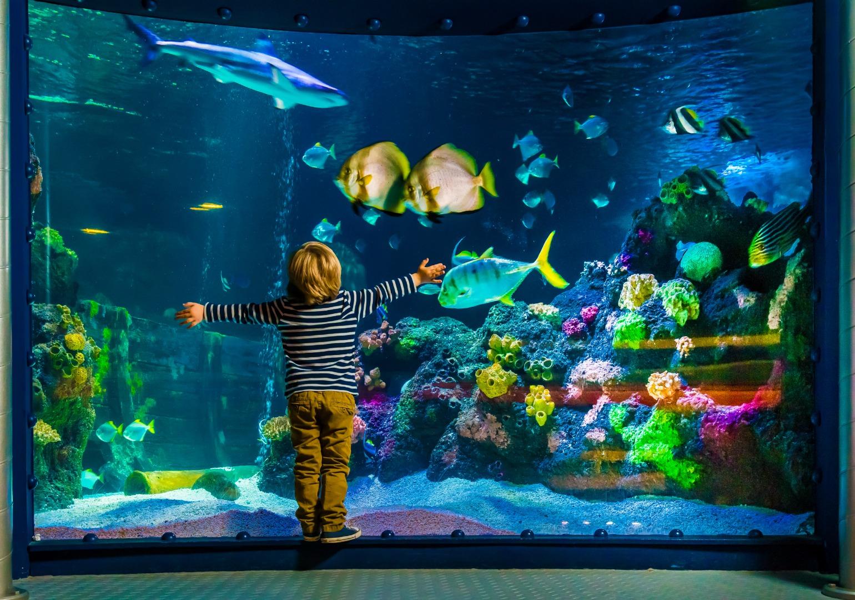 acheter-un-aquarium-poisson