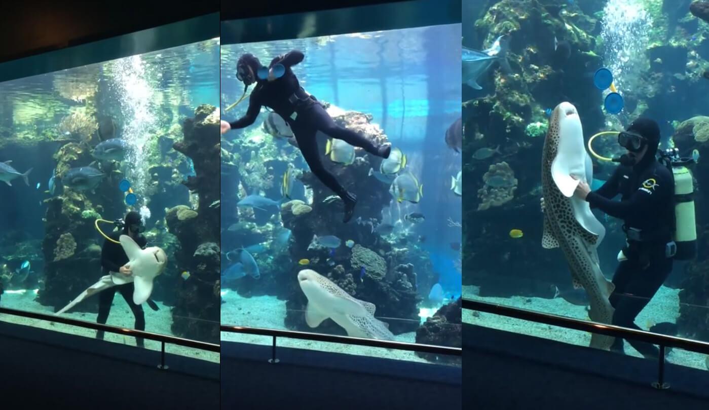 acheter-un-aspirateur-aquarium