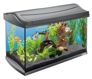 aquarium poisson 60l tetra AquaArt