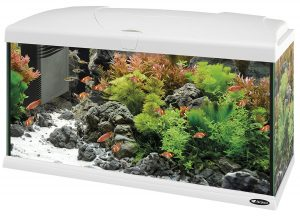 aquarium poisson design-ferplast-capri-80-100l