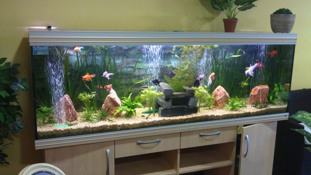 aquarium poisson