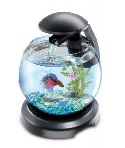 aquarium-poisson-rouge-tetra-cascade