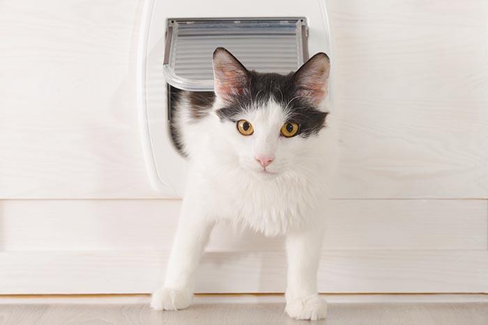 chatière pour chat