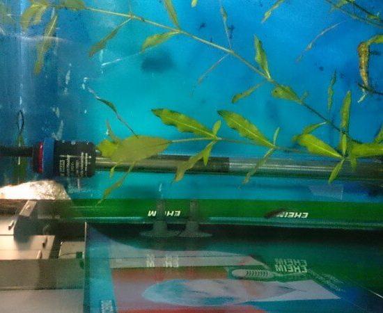 chauffage aquarium guide achat