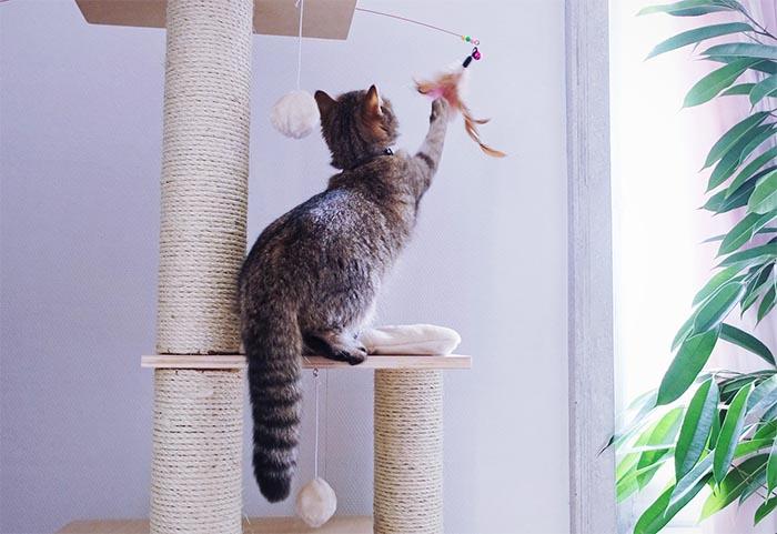 choisir un arbre a chat