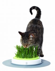 jardin-herbe-a-chat