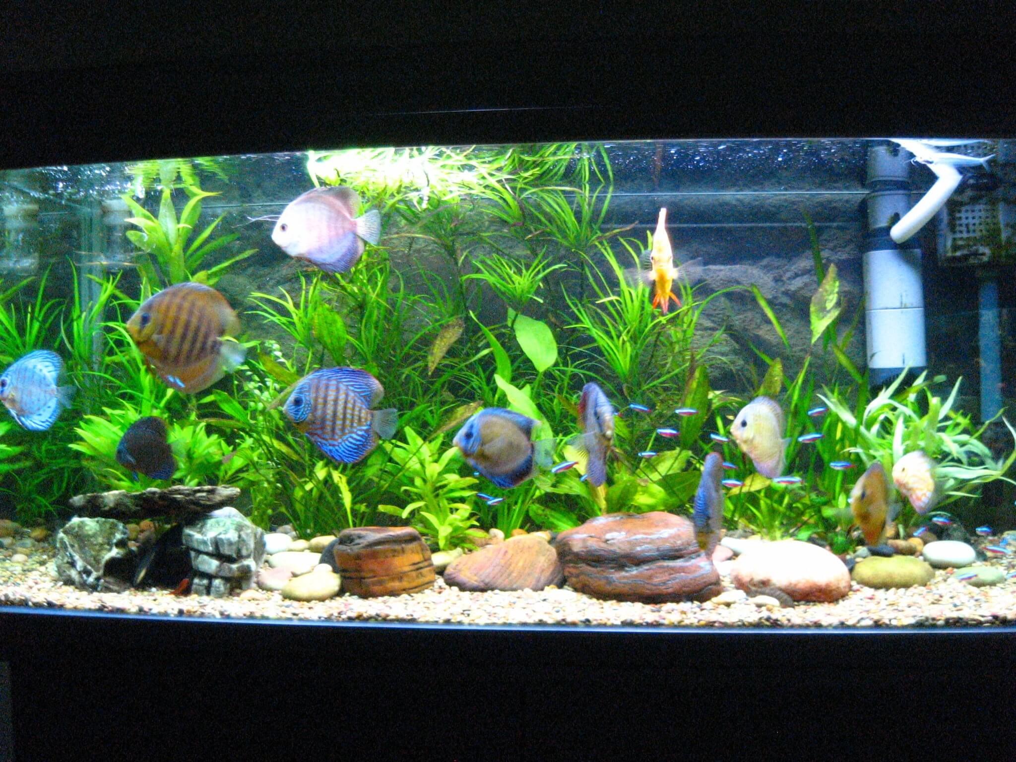meilleur-aspirateur-aquarium
