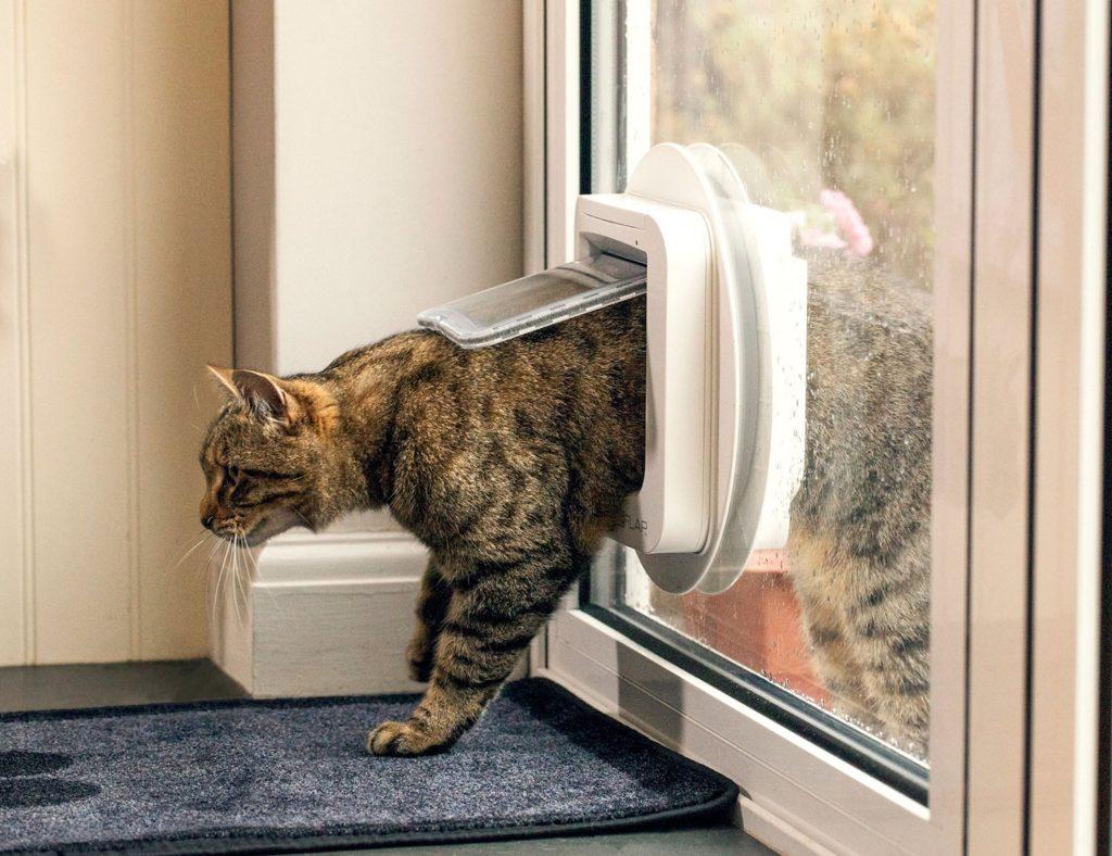 meilleure chatière pour chat