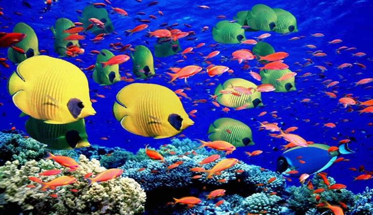 nettoyer algues aquarium