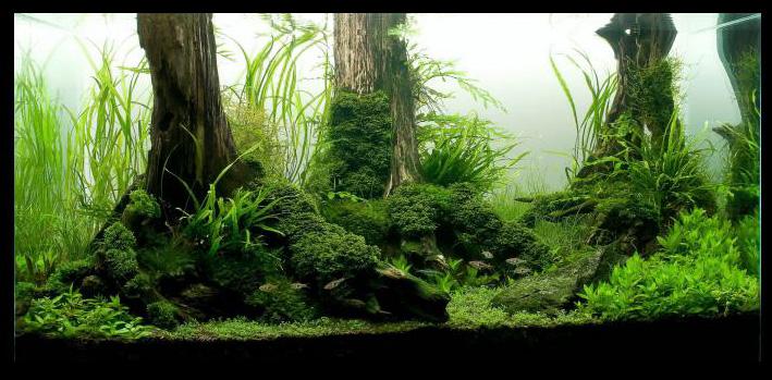 pourquoi-acheter-un-substrat-aquarium