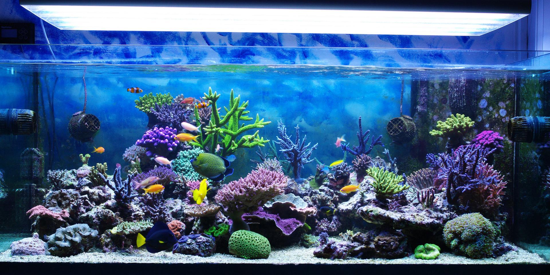 quel-aquarium-choisir
