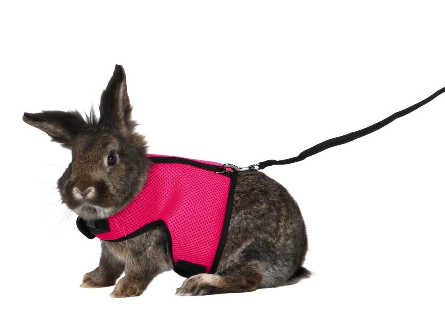 acheter-un-harnais-lapin