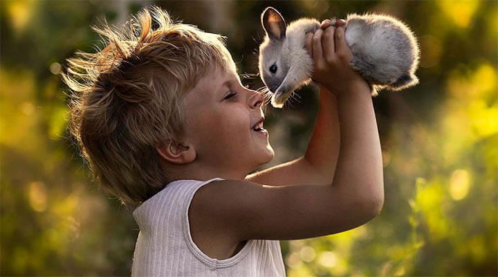 acheter-un-lapin-a-un-enfant