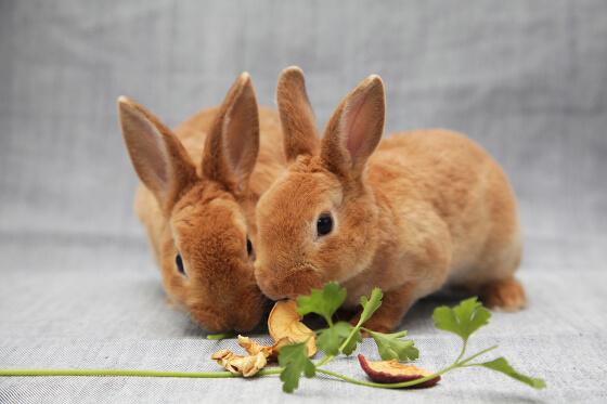 alimentation-du-lapin
