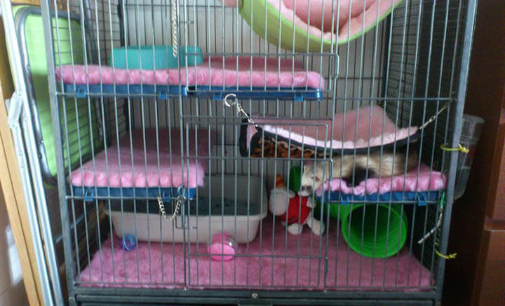 amenagement-cage-furet