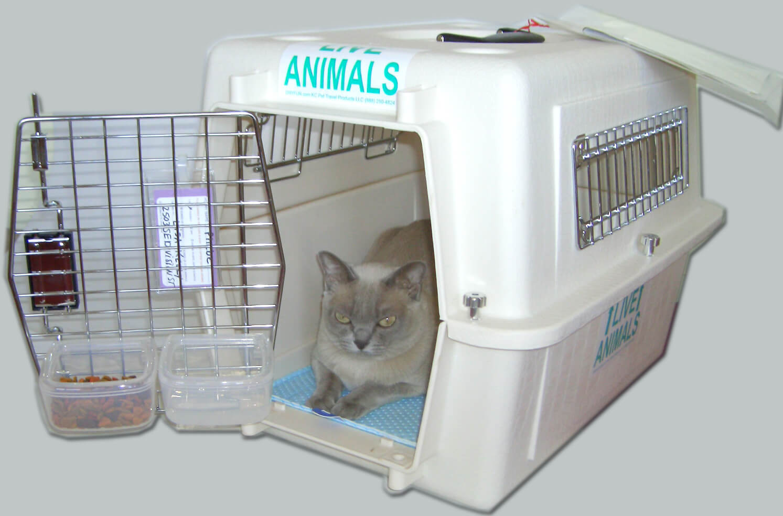 cage-de-transport-chat