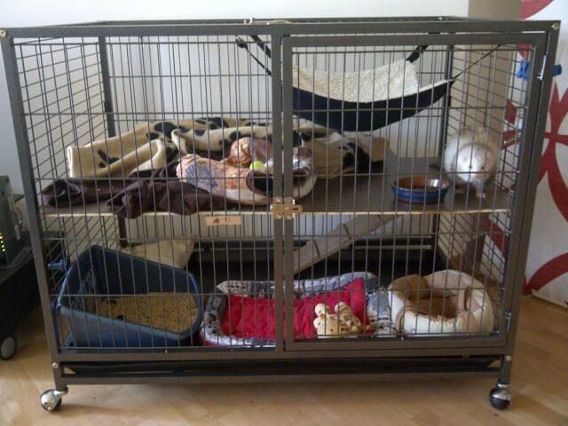 cage-furet-interieur