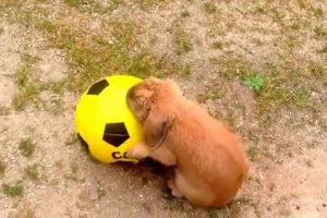 jouer-avec-un-lapin