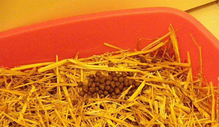 litiere pour lapin utilite