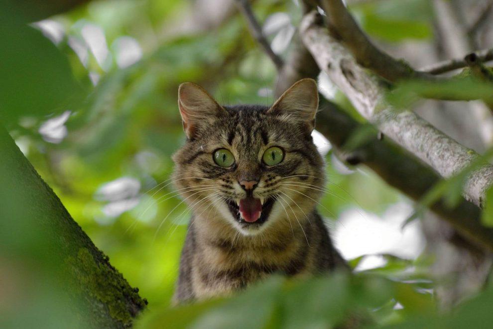 chat peur des concombres