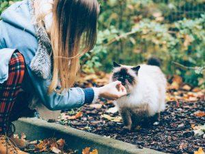 faire prendre medicament a un chat