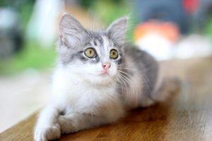 chat et eau de javel