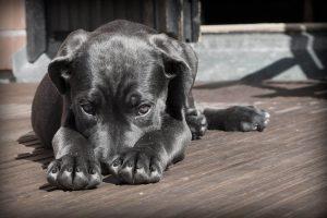 chien triste timide