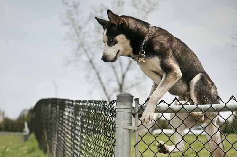 La fugue du chien les causes et les solutions