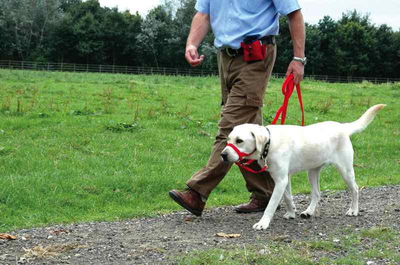 avantages licol chien