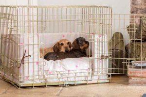cage pour chien pour ou contre