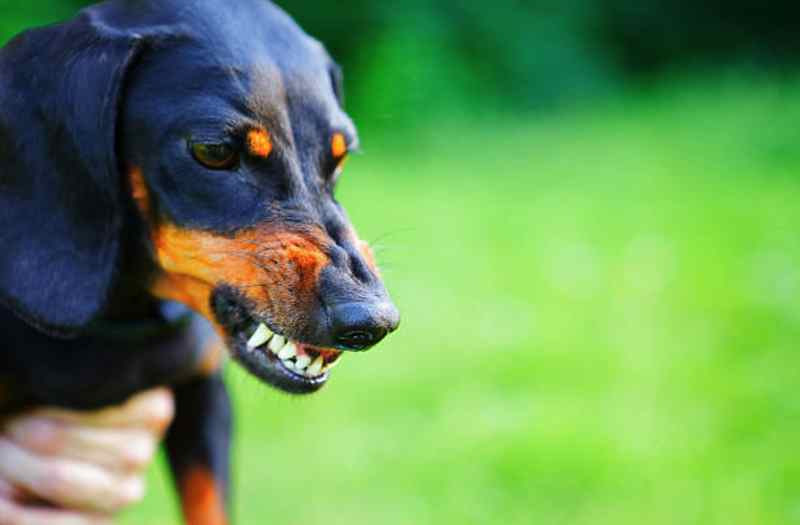 comment eviter agressivite chien
