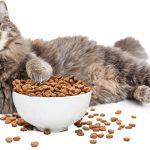 croquettes ou patee pour chat que choisir